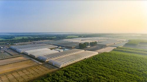 Miễn phí tham quan nông trường công nghệ cao VinEco