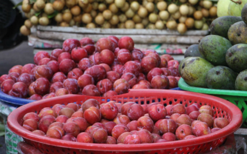 Mùa mận Hà Nội không còn nhiều nhưng ở 1 vài chợ sản phẩm này vẫn phân phối đầy có giá rẻ. Ảnh: Thi Hà