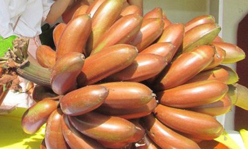 Chuối đỏ xuất hiện ở 1 hội chợ nông nghiệp diễn ra ở TP HCM chào giá 400.000 đồng 1 kg. Ảnh: Người Lao Động