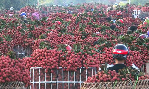 Trung Quốc bao tiêu hơn 90% vải xuất khẩu Việt Nam