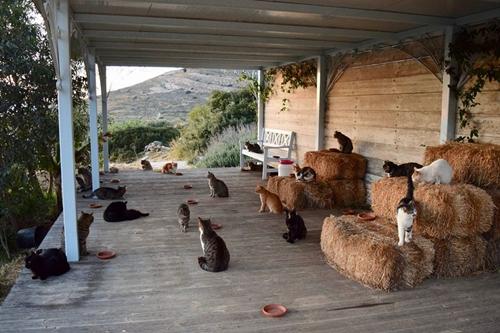 Những chú mèo đang sống ở Gods Little People Cat Rescue. Ảnh: Gods Little People Cat Rescue