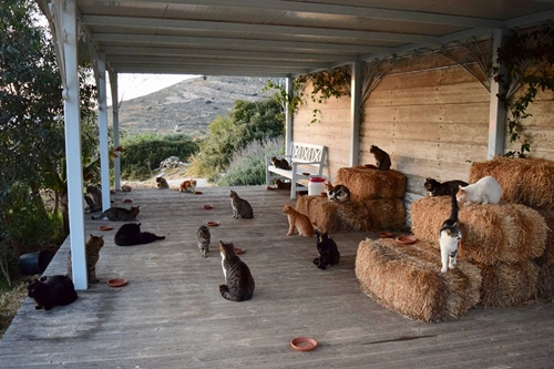 Những chú mèo đang sống tại Gods Little People Cat Rescue. Ảnh: Gods Little People Cat Rescue