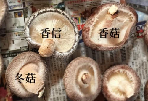 Nấm hương Nhật giá hơn 8 triệu đồng một kg