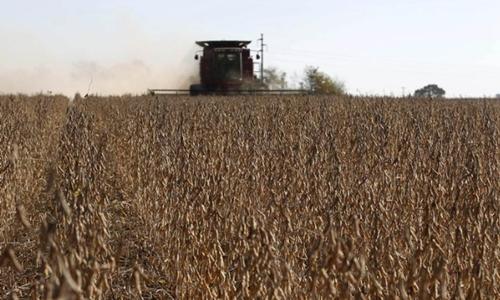Đậu tương đang được thu hoạch ở 1 cánh đồng. Ảnh: Reuters