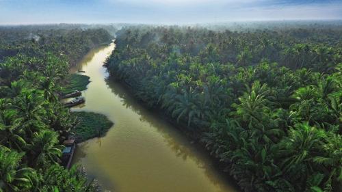 Betrimex triển khai dự án 10.000ha vườn dừa organic