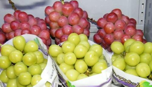 Những trái cây Nhật có giá gấp chục lần hàng Việt - 3