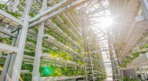 Quy trình sản xuất nông sản công nghệ cao của VinEco