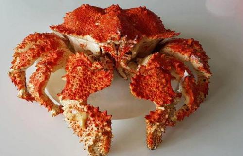 Cua ruby đang được 1 số cửa hàng hải sản ở TP HCM nhập và xách tay về.