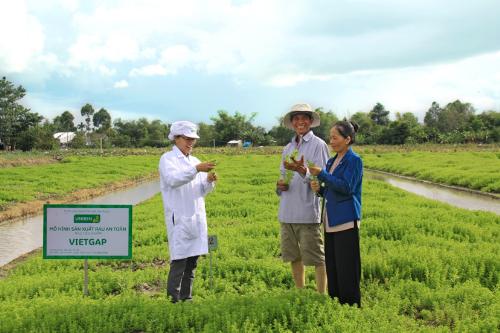 Kỹ sư nông nghiệp Lê Thanh Mai (áo trắng) đang giải đáp hộ nông dân Nguyễn Văn Bé, xã Tân Bình, huyện Châu Thành, tỉnh Đồng Tháp, thực hiện trồng rau ngò ôm theo mô hình VietGAP, cung cấp cho Uniben sản xuất gói gia vị cho mì 3 Miền.