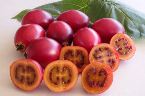 Vỏ dày, hạt to hơn những giống cà chua thông thường.