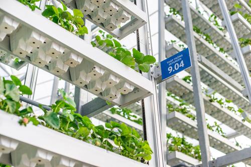 'Nông nghiệp 4.0 cần bắt đầu từ bớt phân thuốc'