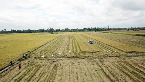 Ra mắt dự án hỗ trợ nông hộ nhỏ canh tác lúa tại châu Á - Thái Bình Dương