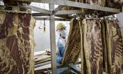 Các nước thay chân Mỹ bán thịt lợn sang Trung Quốc