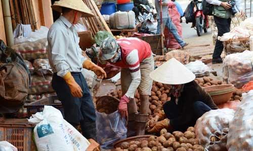 Khoai tây Trung Quốc được khoác áo mới để biến thành khoai Đà Lạt, bán tại các chợ dân sinh. Ảnh: Quốc Dũng