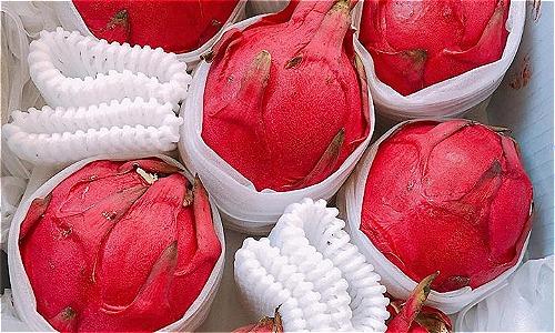 Trọng lượng của thanh long ruột đỏ Đài Loan có trái nặng tới 1,5kg.