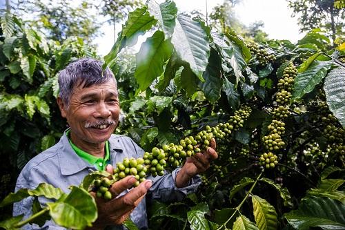 Better Life Farming phát triển tiềm năng canh tác cà phê Việt Nam