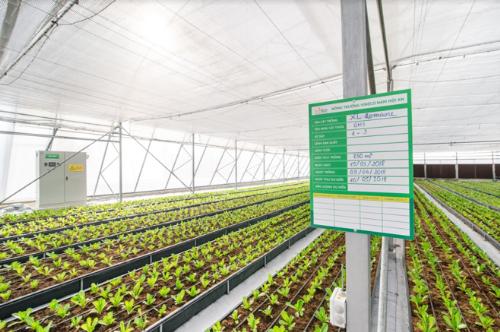 Bài toán đầu tư sản xuất nông sản sạch tại Việt Nam