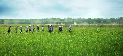 Tiềm năng phát triển nông nghiệp Việt từ kinh nghiệm của Malaysia