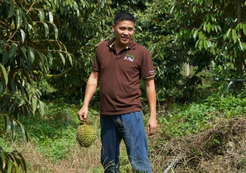 Anh 'nông dân trí thức' chỉ bán sầu riêng 200.000 đồng mỗi kg