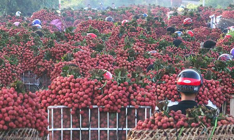 Việt Nam có thể nhập siêu 3 tỷ USD năm 2019