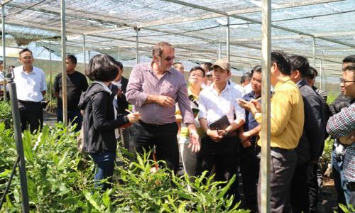 Chuyên gia đến từ Australia hướng dẫn người dân tại Lâm Đồng cách phân biệt, lựa chọn giống mắc ca tốt. Ảnh: Khánh Hương