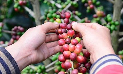 Arabica - đánh thức thương hiệu cà phê đặc sản Việt Nam - Kinh Doanh