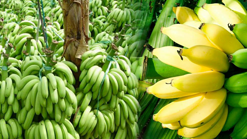 Những loại trái cây sốt giá nhờ Trung Quốc tăng mua