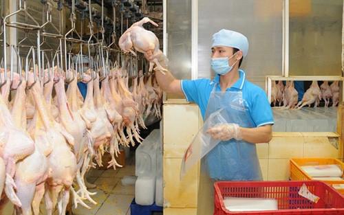 Thịt gà tăng giá mạnh. Ảnh minh họa.