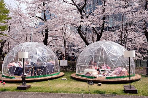 Dịch vụ tiệc hanami cao cấp trong lều tròn trong suất. Ảnh: Bloomberg