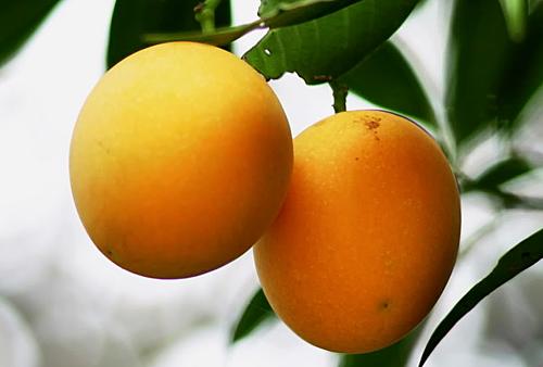 thanh trà là loại trái cây giải nhiệt bán khá chạy.