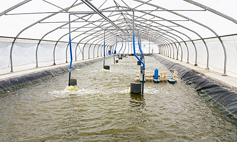 Mô hình 'Ba chuẩn' giúp tăng năng suất nuôi trồng thủy sản