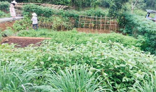 Trang trại cho thuê để trồng raucủa một doanh nghiệp ở vùng ven Hà Nội. Ảnh: NVCC