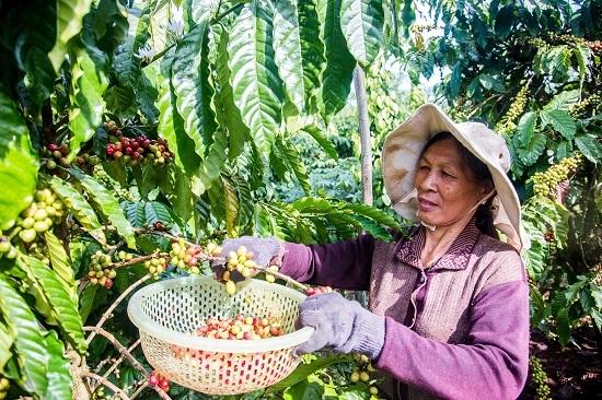 EVFTA sẽ thúc đẩy mạnh xuất khẩu nông sản một cách bền vững.