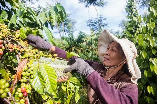 Đến năm 2030 có khoảng 100.000 doanh nghiệp nông nghiệp - ảnh 1