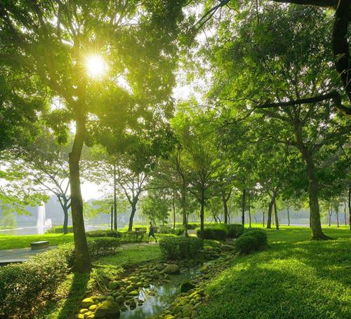 Nội khu Celadon City ngập tràn không gian xanh - điều hiếm thấy ở các khu đô thị cao cấp hiện nay