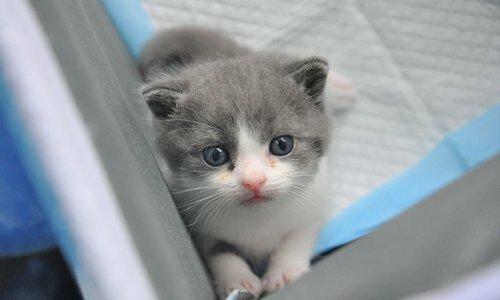 35.400 USD một con mèo nhân bản vô tính ở Trung Quốc - ảnh 2