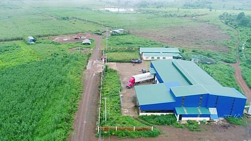 Nhà máy sản xuất đường hữu cơ của Hoa Nắng tại Sekong, Lào.