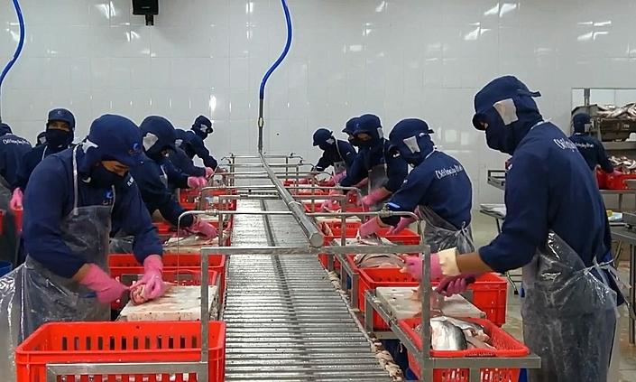 Người lao động làm việc tại nhà máy chế biến thuỷ sản Cỏ May. Ảnh: Ngọc Hà.