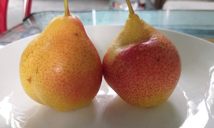 1kg lê má hồng gồm 25-30 quả. Ảnh: Hồng Châu.