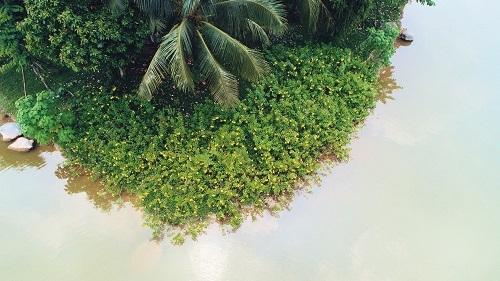Các biệt thự dự án bao quanh bởi không gian mặt nước và cây xanh.
