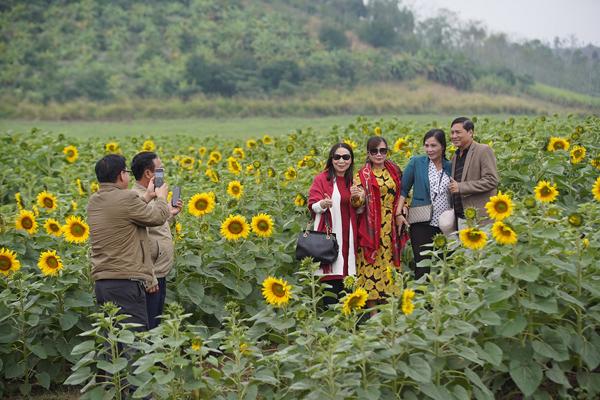 Du khách tham quan, chụp ảnh tại cánh đồng hoa hướng dương của TH true Milk.