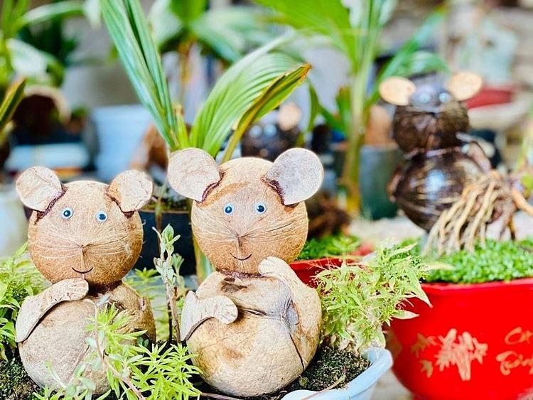 Dừa bonsai hình chuột tại vườn nhà ông Quân. Ảnh: Hồng Quân.