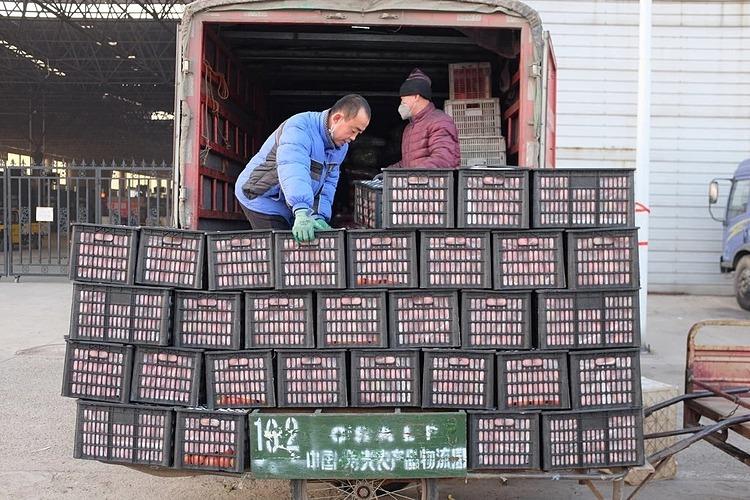 Nông sản được đưa lên xe tải tại Thọ Quang, Sơn Đông. Ảnh: NYT
