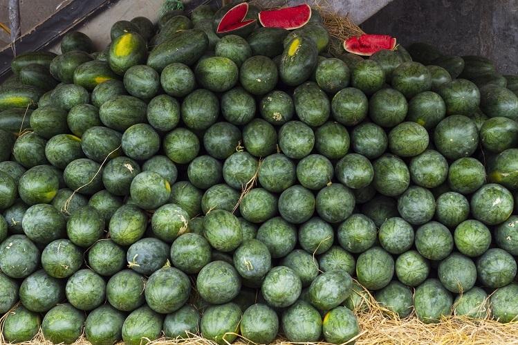 Sacombank mua dưa hấu hỗ trợ nông dân - ảnh 1