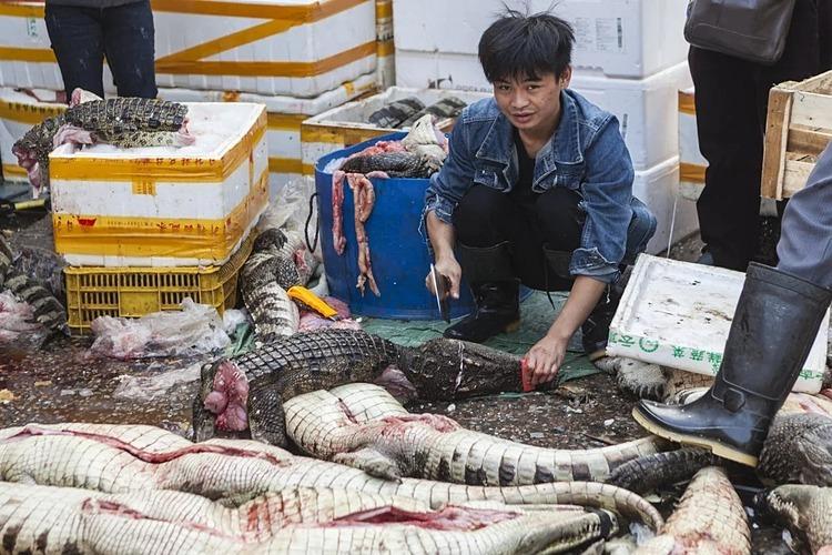 Trung Quốc nỗ lực cắt cơn thèm động vật hoang dã - ảnh 2