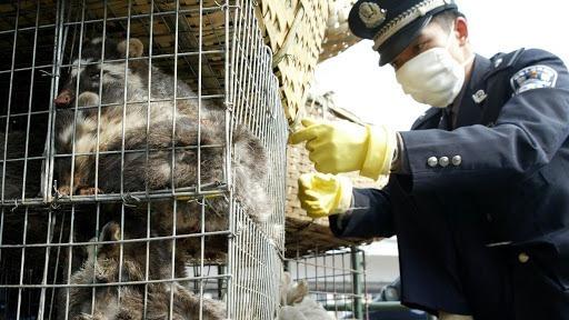 Trung Quốc nỗ lực cắt cơn thèm động vật hoang dã - ảnh 1