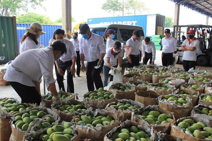 Vedan Việt Nam thu mua xoài giúp nông dân Đồng Nai