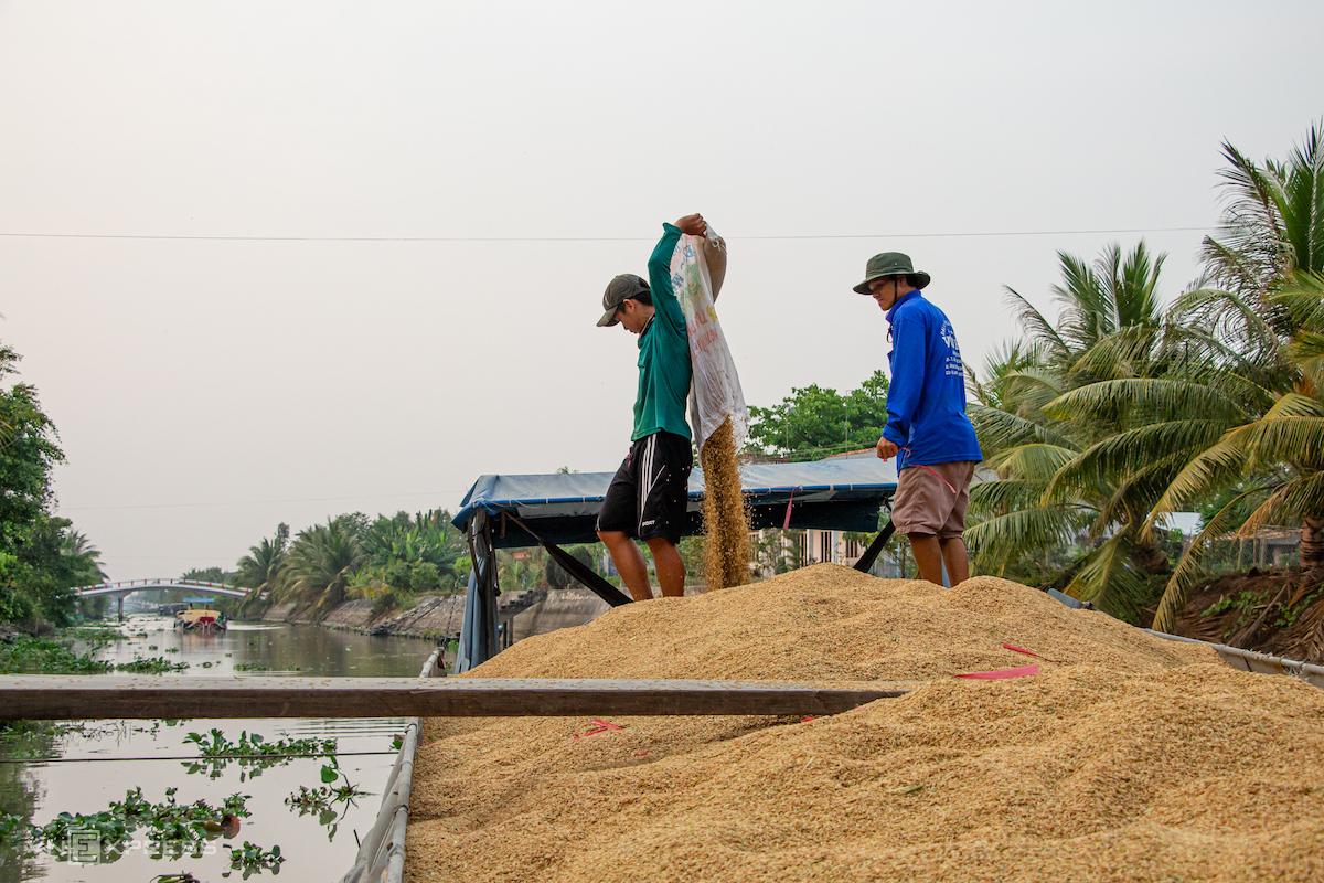 Bộ Công Thương kiến nghị xuất khẩu gạo trở lại - ảnh 1