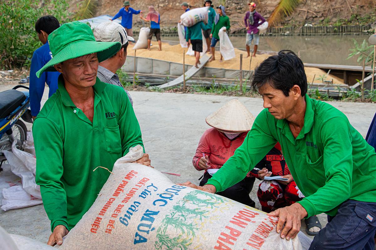 Nông dân xã Thạnh An (Cần Thơ) thu hoạch lúa vụ Đông Xuân. Ảnh: CTVTS.