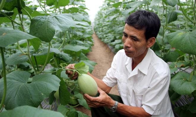 Việt Nam đứng thứ hai khu vực về triển vọng phục hồi nông nghiệp thực phẩm